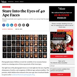 Stare Into the Eyes of 40 Ape Faces