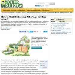 How to Start Beekeeping: What's All the Buzz About?