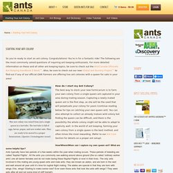 Starting Your Ant Colony - AntsCanadaAntsCanada