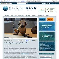 Sea Lion Pups Starving Along California Coast