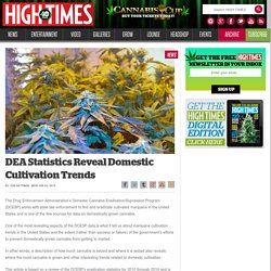 DEA Statistics Reveal Domestic Cultivation Trends