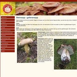 Steinsopp - gallerørsopp » Sopp gir høsten mening