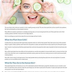 Stem Cells in Skincare