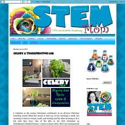 STEM Mom: Celery & Transpiration Lab