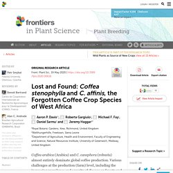 Lost and Found: Coffea stenophylla and C. affinis, the Forgotten Coffee Crop Species of West Africa