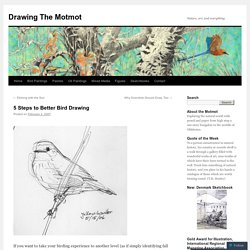 5 Steps to Better Bird Drawing | Drawing The Motmot