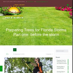 Steps to Take With Tress in Florida Due to Florida's high-wind Storms Part one: what to do before the storm