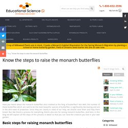 Know the steps to raise the monarch butterflies