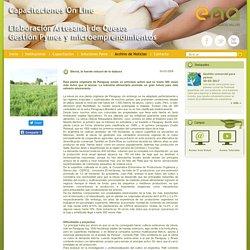Stevia, la fuente natural de la dulzura - El Nuevo Agro