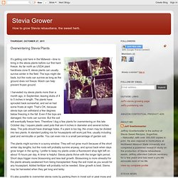 Overwintering Stevia Plants