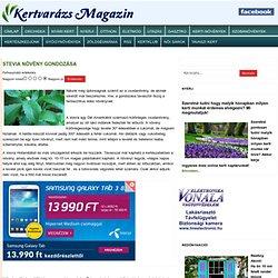 Stevia növény gondozása