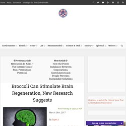Broccoli Can Stimulate Brain Regeneration, New Research Suggests