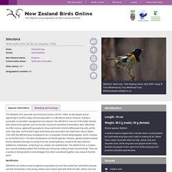Stitchbird