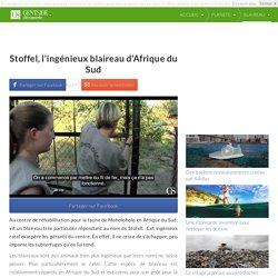 Stoffel, l'ingénieux blaireau d'Afrique du Sud