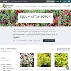 Sedum (Stonecrop) for Sale Online