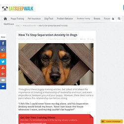 How To Stop Separation Anxiety In Dogs - Eat Sleep Walk