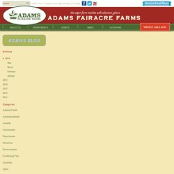 Storing, Drying & Freezing Mint - Adams Fairacre Farms