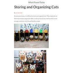 Storing and Organizing Cats
