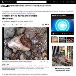 Storms bring forth prehistoric treasures