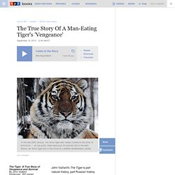 The True Story Of A Man-Eating Tiger's 'Vengeance'