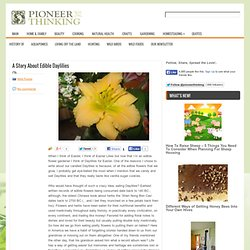 A Story About Edible Daylilies