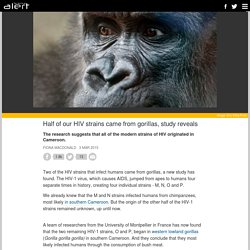 Half of our HIV strains came from gorillas, study reveals