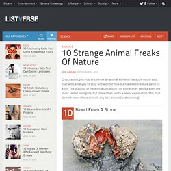 10 Strange Animal Freaks Of Nature - Listverse - Nightly