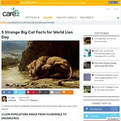5 Strange Big Cat Facts For World Lion Day