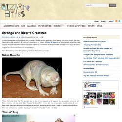 Strange and Bizarre Creatures