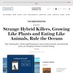 Strange Hybrid Killers, Growing Like Plants and Eating Like Animals, Rule the Oceans