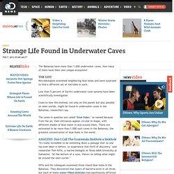 Strange Life Found in Underwater Caves