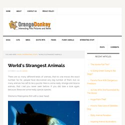 Orange Donkey – World's Strangest Animals