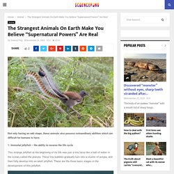 """The Strangest Animals On Earth Make You Believe """"Supernatural Powers"""" Are Real - Science Ping"""