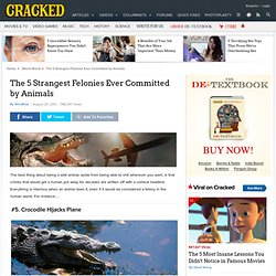CRACKED: The 5 Strangest Felonies Ever Committed by Animals