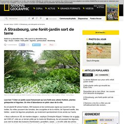 À Strasbourg, une forêt-jardin sort de terre