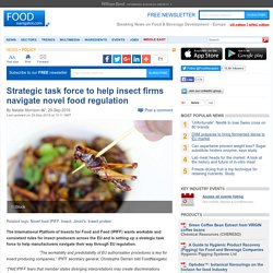 Strategic task force to help insect firms navigate novel food regulation