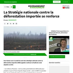 La Stratégie nationale contre la déforestation importée se renforce