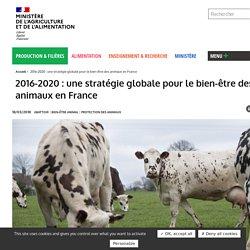 2016-2020 : une stratégie globale pour le bien-être des animaux en France