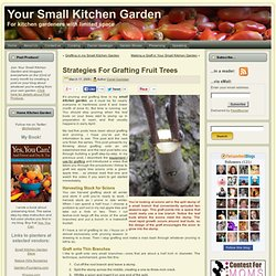 Strategies For Grafting Fruit Trees