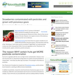 Strawberries contaminated with pesticides and poisonous gases