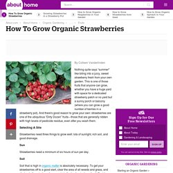 Strawberries - Organic Gardening Tips