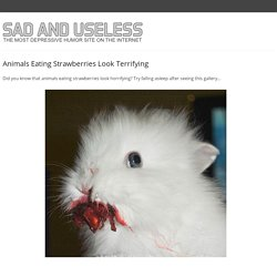 Animals Eating Strawberries Look Terrifying