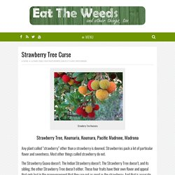 Strawberry Tree Curse - Eat The Weeds and other things, too