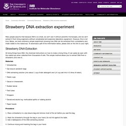 Strawberry DNA extraction experiment - Institute for Molecular Bioscience - The University of Queensland, Australia
