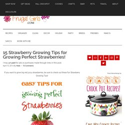 15 Strawberry Growing Tips for Growing Perfect Strawberries!