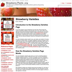 Strawberry Varieties