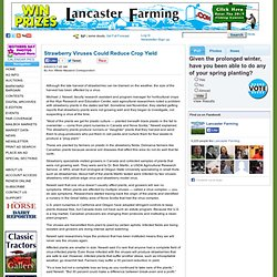 LANCASTER FARMING 08/06/13 Strawberry Viruses Could Reduce Crop Yield