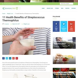 11 Health Benefits of Streptococcus Thermophilus