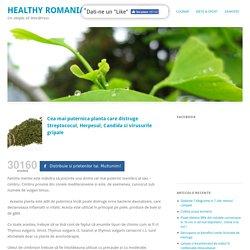 Cea mai puternica planta care distruge Streptococul, Herpesul, Candida si virusurile gripale - Healthy Romania