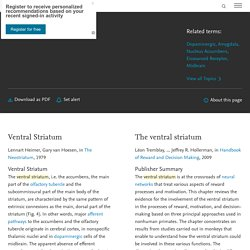 Ventral Striatum - an overview